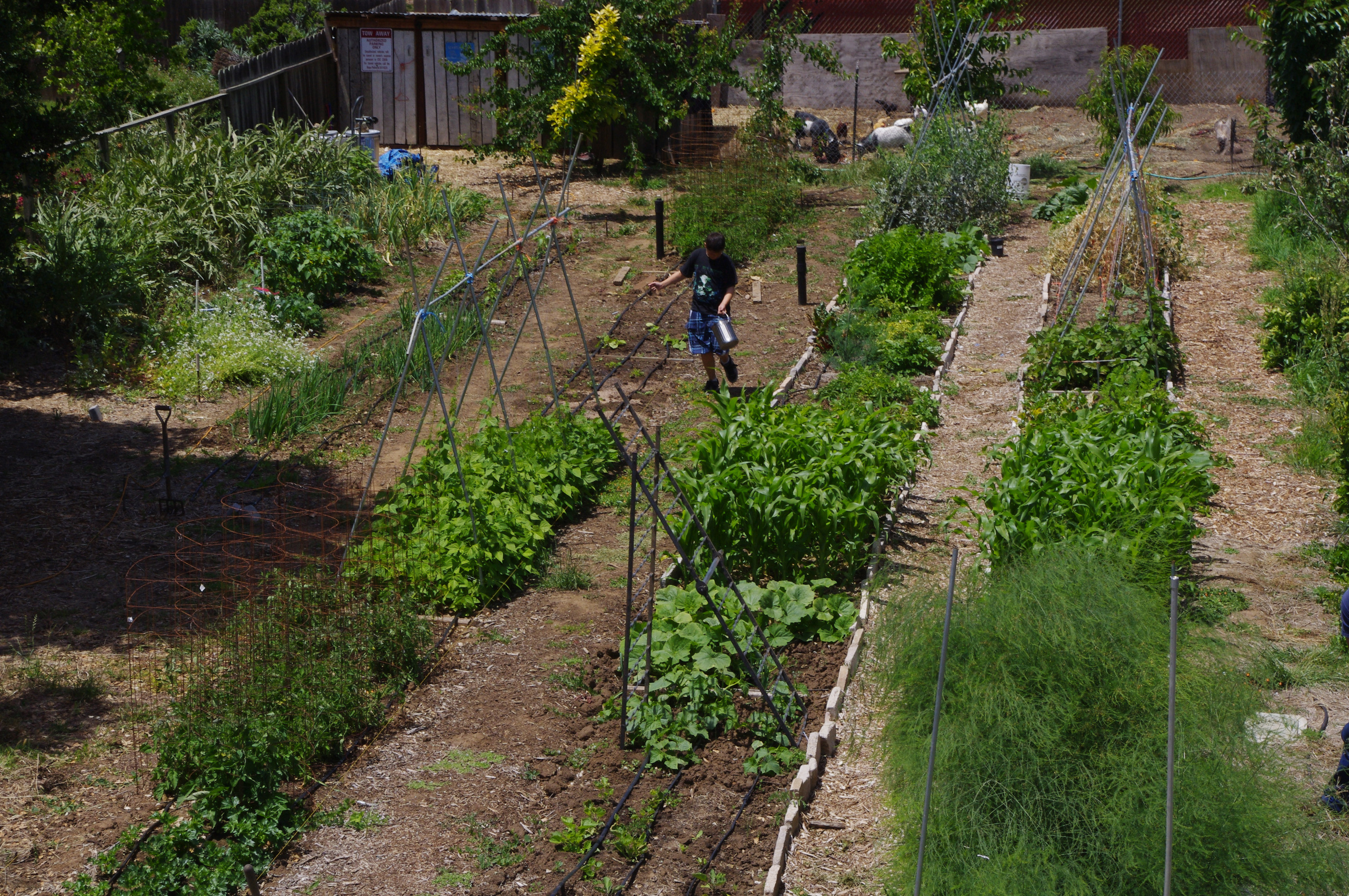 Vegetable garden rows - There Are Many Types Of Vegetable Gardens